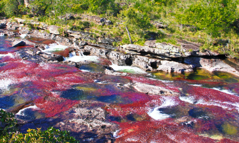 Recomendaciones para tu viaje a Caño Cristales, el río más lindo del mundo