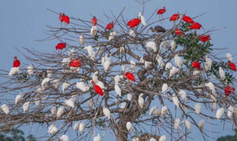 Casanare, una mina de biodiversidad