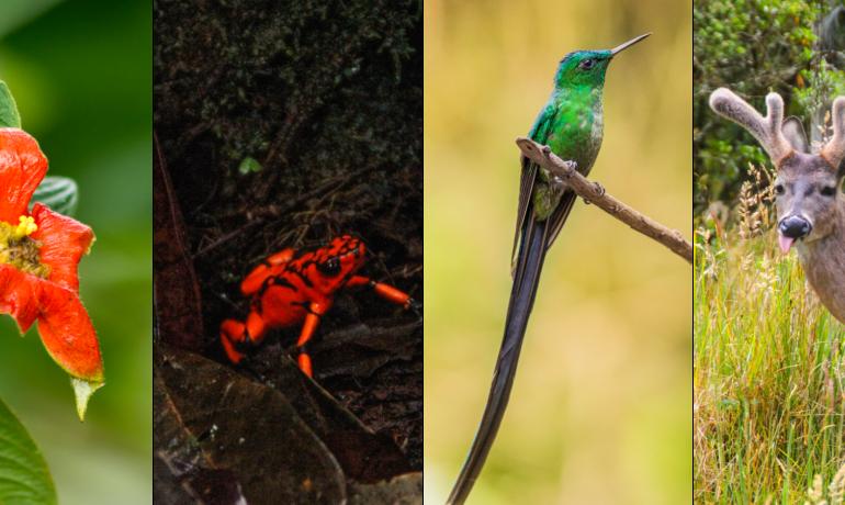 Colombia el segundo país más biodiverso del mundo